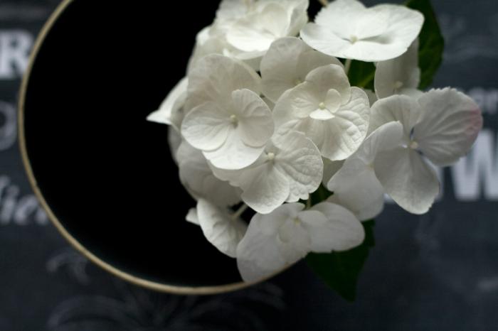 dark hydrangea simplypause.worpress.com